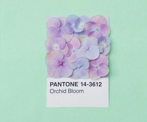 color and pantone image
