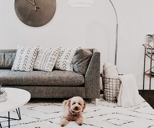 cozy, dog, and fluffy image