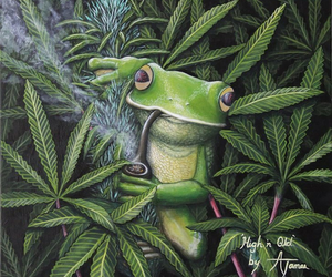 frog and marijuana image