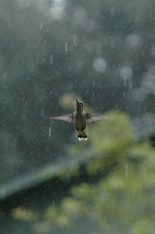 rain, bird, and photography image
