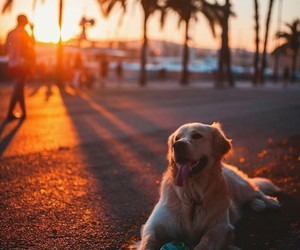 animals, puppy, and sunset image