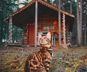 cat, bengal, and nature image