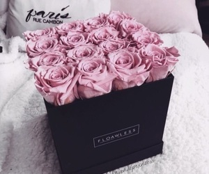 beauty, fashion, and pink rose image