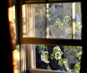 flowers, window, and spring image