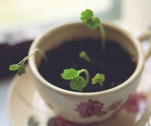 plants, cup, and teacup image