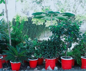 flower pots, photograpgy, and red image
