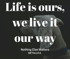 metallica, nothing else matters, and musixmatch image