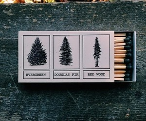 tree, match, and autumn image