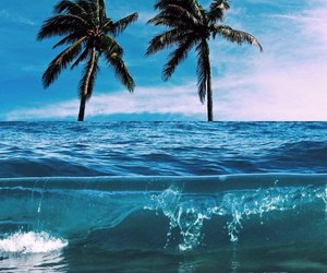 ocean, palm trees, and vacation image