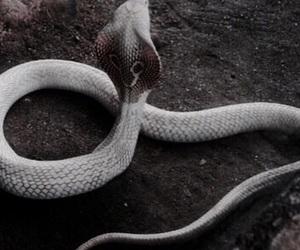 theme, snake, and fade image