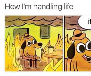 funny, fire, and dog image