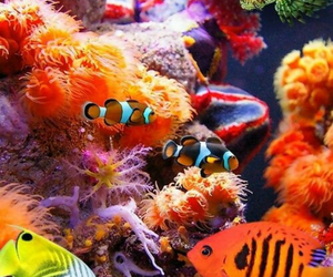 ocean, sealife, and fish image
