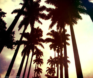 palm trees, brazil, and california image
