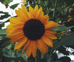 fall, flower, and Sunny image