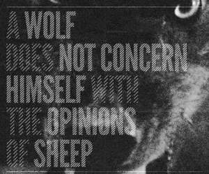 wolf, quote, and sheep image