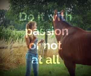 animal, freedom, and horseriding image