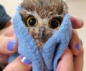 owl, animal, and cute image