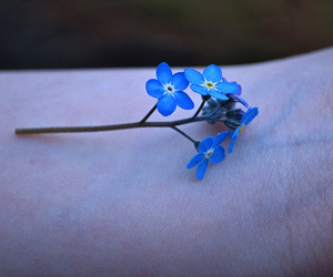 blue, flower, and skin image