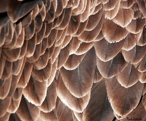 brown, feather, and feathers image
