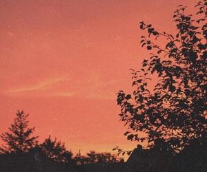 fall, morning, and orange image