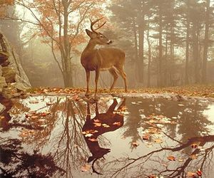 autumn and deer image