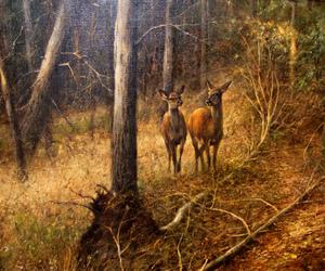 deer, forest, and rien poortvliet image