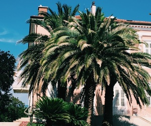 architecture, Croatia, and palmtrees image