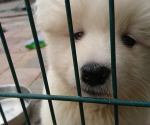 animals, dogs, and fluffy image