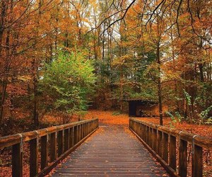 autumn, bridge, and inspiration image