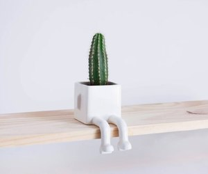 cactus, flower pot, and foot image