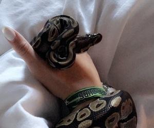 animal, hand, and snake image