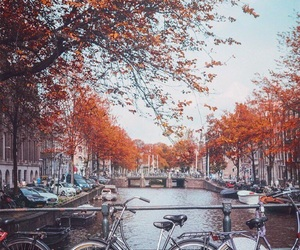 autumn, bicycle, and trees image