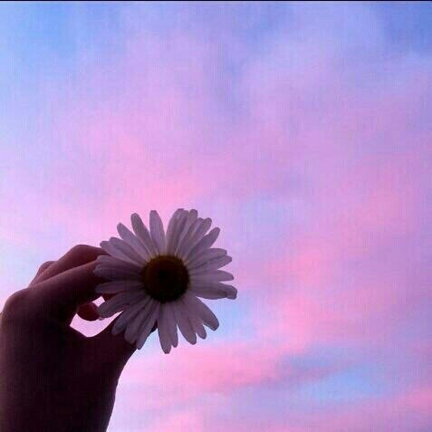 flowers, purple, and sky image