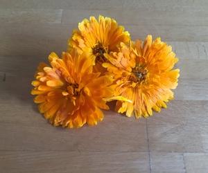 bellezza, fiori, and magia image