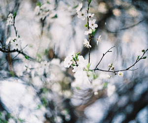 35mm, film, and flowers image