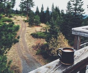 coffee, nature, and forest image