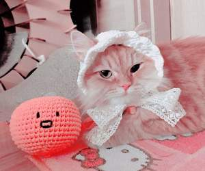 cat, aesthetic, and cute image