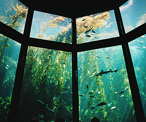 fish, aquarium, and water image