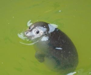 seal, adorable, and animal image