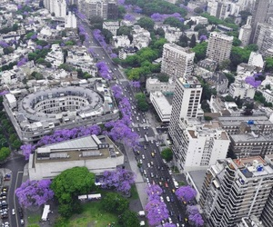 city, purple, and flowers image