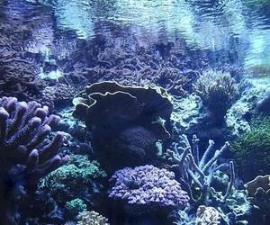 ocean, underwater, and coral image