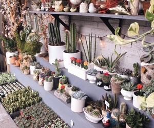 cactus, california, and farmers market image
