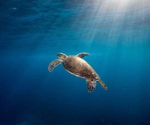 beach, nature, and turtle image