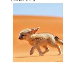 animal, fox, and desert image