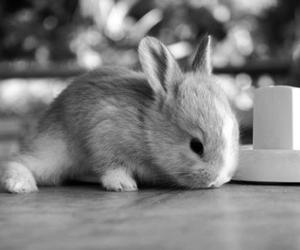black and white and bunny image