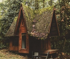 forest, home, and cabin image