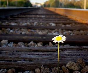 beauty, flower, and resilience image