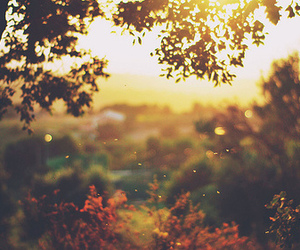 autumn, header, and nature image