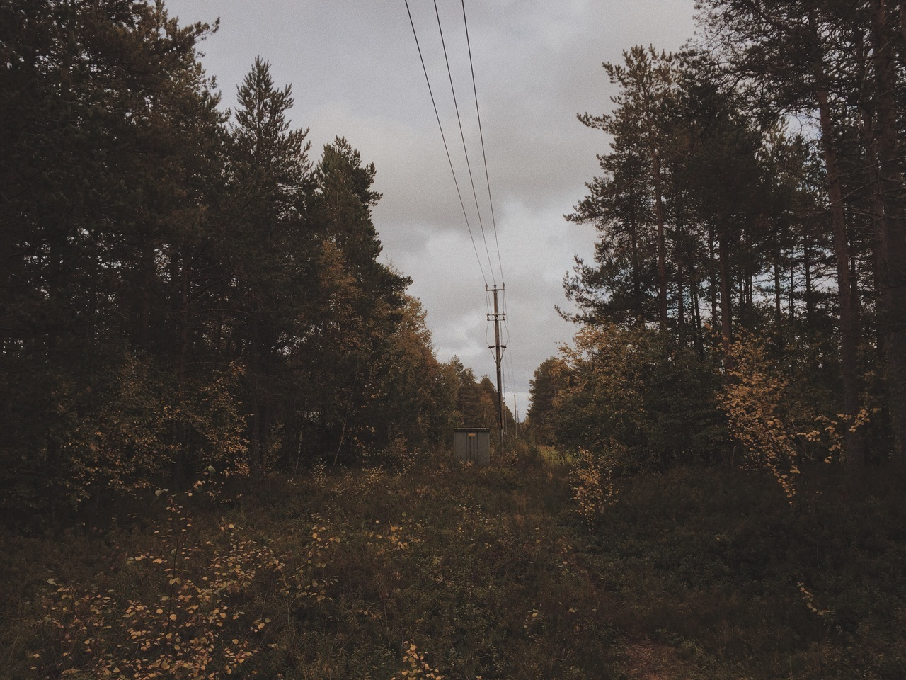 adventure, aesthetic, and autumn image