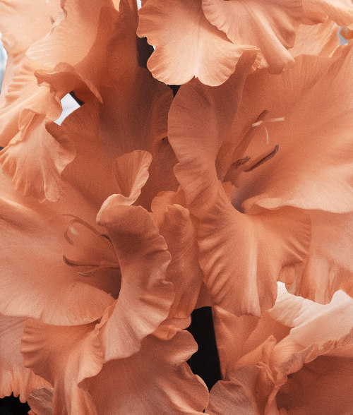 flowers, peach, and aesthetic image